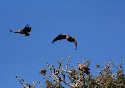 Zona de Protección de Aves